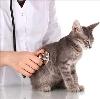 Ветеринарные клиники в Каменском
